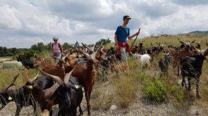 Balade à la rencontre des chèvres du Rove organisée par Hôtel du Nord © DR