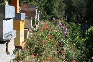 Portes ouvertes chez les abeilles
